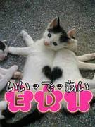 心斎橋 EDI 関西