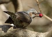 三浦半島素人野鳥写真を楽しむ会