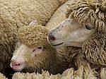 有線 J−26「羊の数」