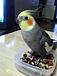 鳥が好き in和歌山