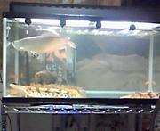 熱帯魚in福岡