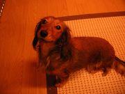 栃木県北!愛犬家の集い♪