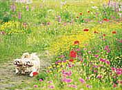 北海道・紫竹ガーデン