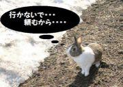 むっつりウサギ病患者