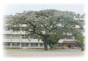 鹿児島市立川上小学校