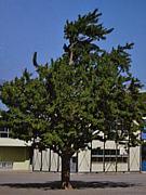 厚木市相川小1985年度6年3組の会