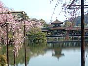 京都っ子が案内する京都観光
