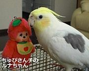 オカメインコin東京&ご近所
