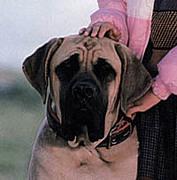 パパになりたかった犬