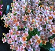 花の育て方