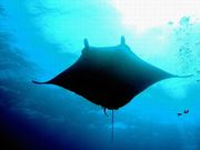 RA -Scuba Diving Circle-