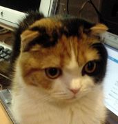 称号『猫』が使いたいんだもん!