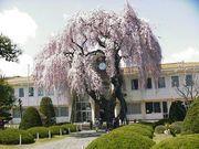長野県山形村立山形小学校