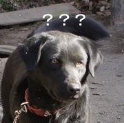 犬には理解できなかった。