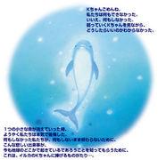 イルカのKちゃん