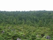 Nordic Hiking/NH