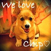 愛犬チップ