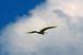 千葉/野鳥の楽園