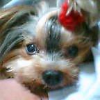 小型犬 オフ会交流 九州地区