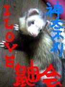 I LOVE鼬会in神奈川