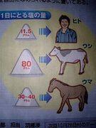 草食動物と塩