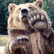 野生の熊を見に行こう!