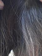 すーたんの白髪を気にするコミュ