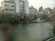 中央線沿い桜で上京思いだす