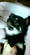 奈良県小型犬大好き!