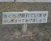 根田チルドレン