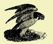 マルタの鷹協会