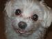 シニア犬と暮らす