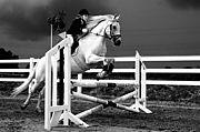 Showa Equestrian Team
