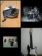 音楽と猫が好きな人