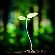 日大植物資源科学科-P.S.R.
