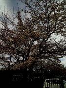 ☆柏陽中97年卒の広場☆