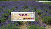 札幌市南区南沢の会