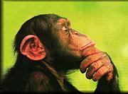 考える猿の集い