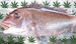 BIG UP 天然魚