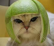 猫武将の気持ち