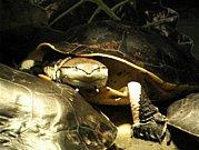 福岡(九州)爬虫類連合