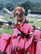 九州の犬好きさん