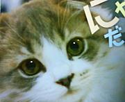 【愛犬&愛猫】西又葵