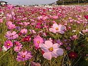 福岡の看護介護で働く人の集まり