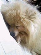 犬&猫*ペットの名前がレオorクゥ
