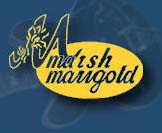 Marsh-marigold Records