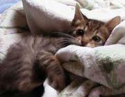 タオルケットがないと眠れない!