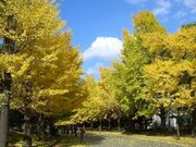 秋になると恋したくなる。