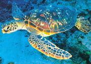 マグ新潟亀の会