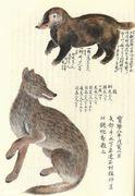 江戸の博物学